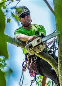 UNBEATABLE RATES Tree Service & Removal