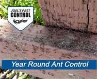 Pest Control In Yuba City CA