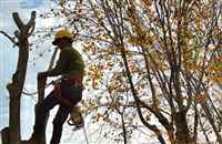 Green Pine Tree Services