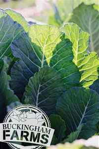 Farm Fresh Produce Fort Myers FL