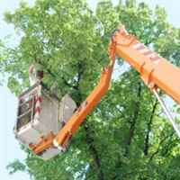 TreeTrimming4