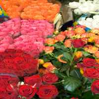 Bangor Floral