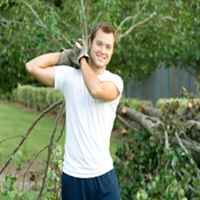 Scott's Tree & Stump Removal