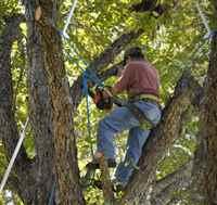 Tree service Bronx NY | tree removal Bronx