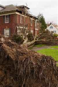 Eddies Bronx Tree Removal