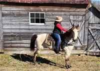 Kathiawari Gaited Horses