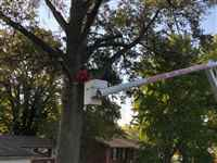 Liscombe Tree Service