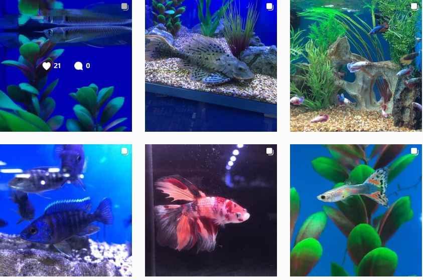 prostar rimless aquarium