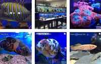 rimless aquarium with stand