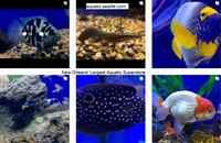 Aquatic-sealife