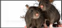 ATAP Pest Exterminators